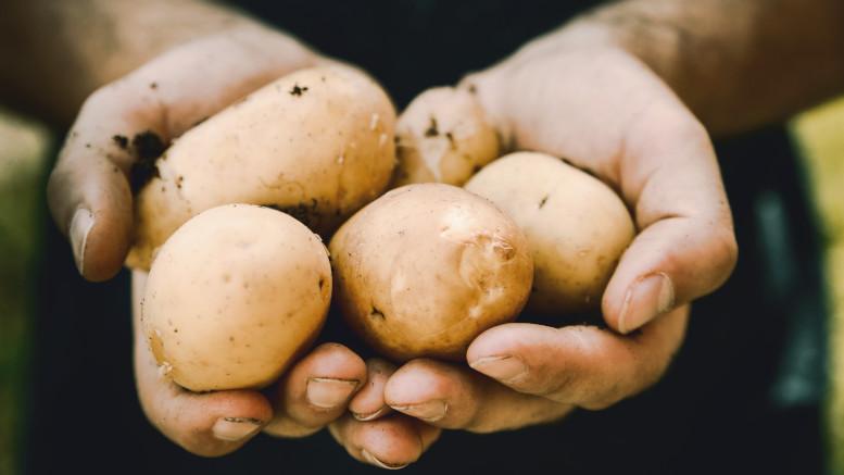 ¿Cómo cultivamos patats en Somalia?