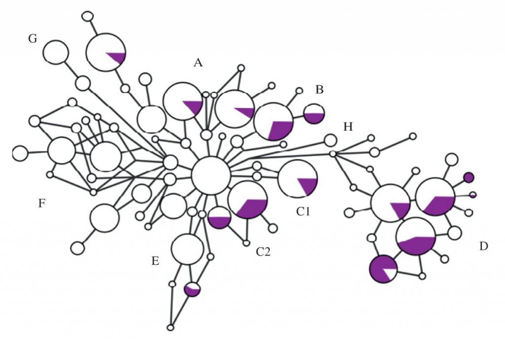 Linajes mitocondriales de los caballos purasangre.
