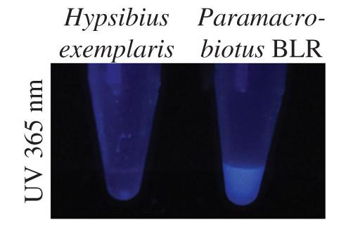 pigmentos fluorescentes de tardígrados